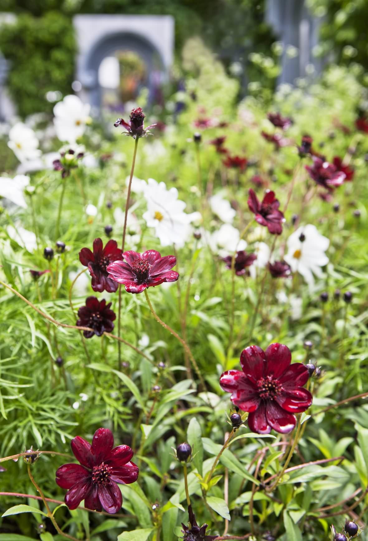 Gally_inlägg nr 2_bild2_Jardins jardin