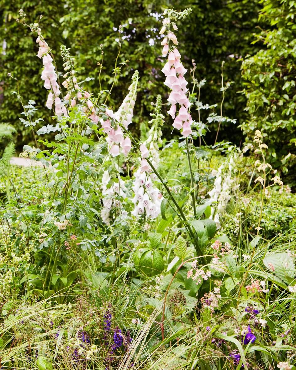 Jardins-jardin-bild-1-inlägg-1_web