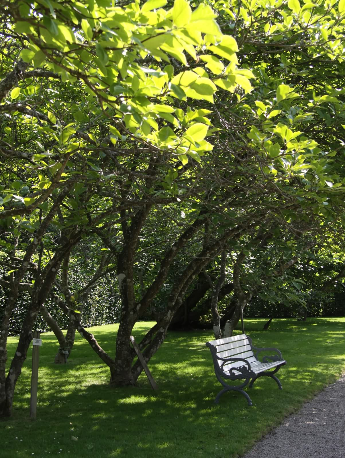 IMG_5882_norrviken_magnolia_web