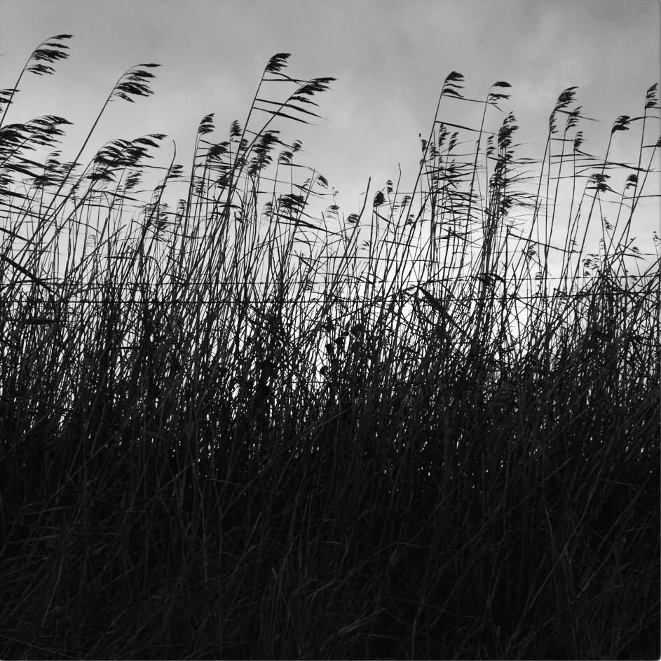 IMG_0777_gräs_SV