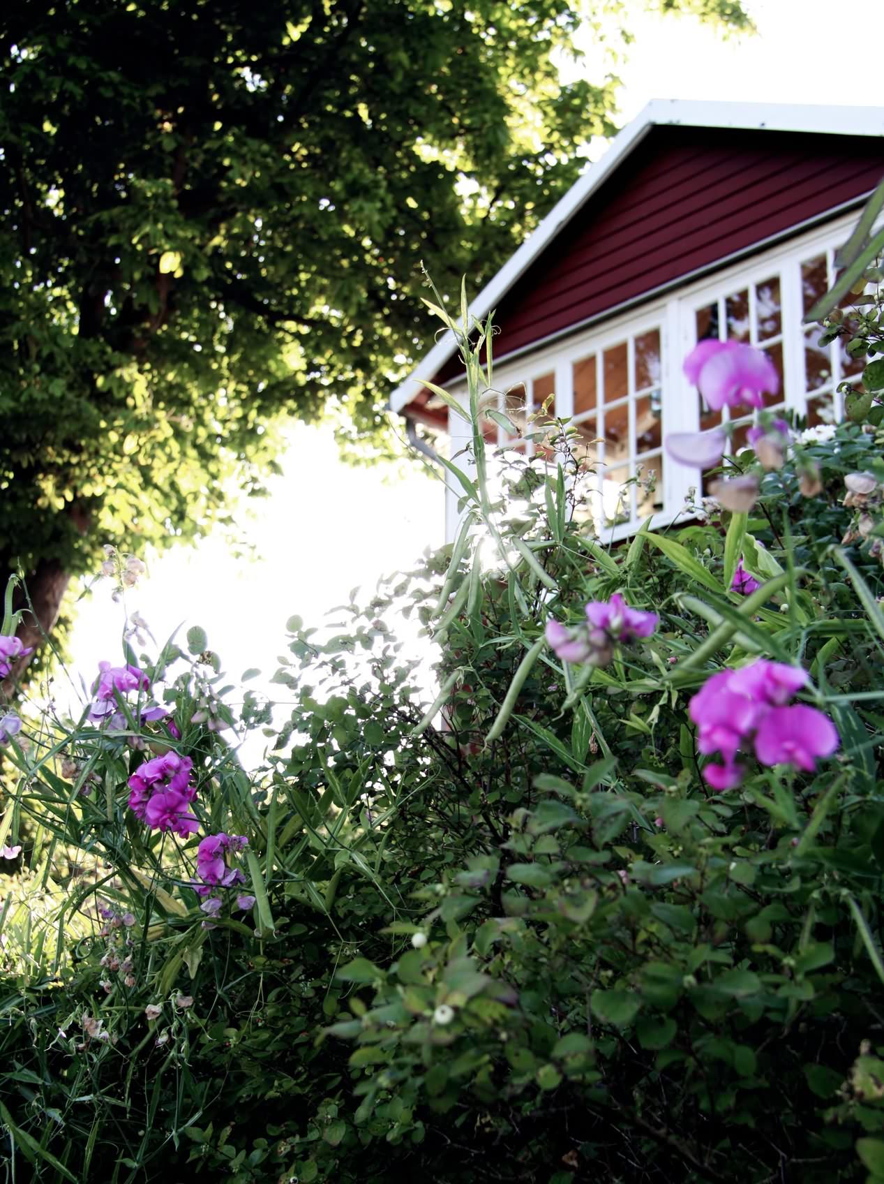 IMG_6934_Citadellet_blommor_hus_web