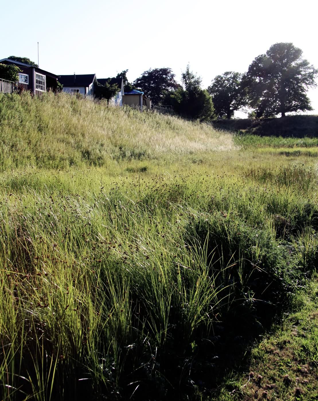 IMG_6971_Citadellet_framför_gräs_web