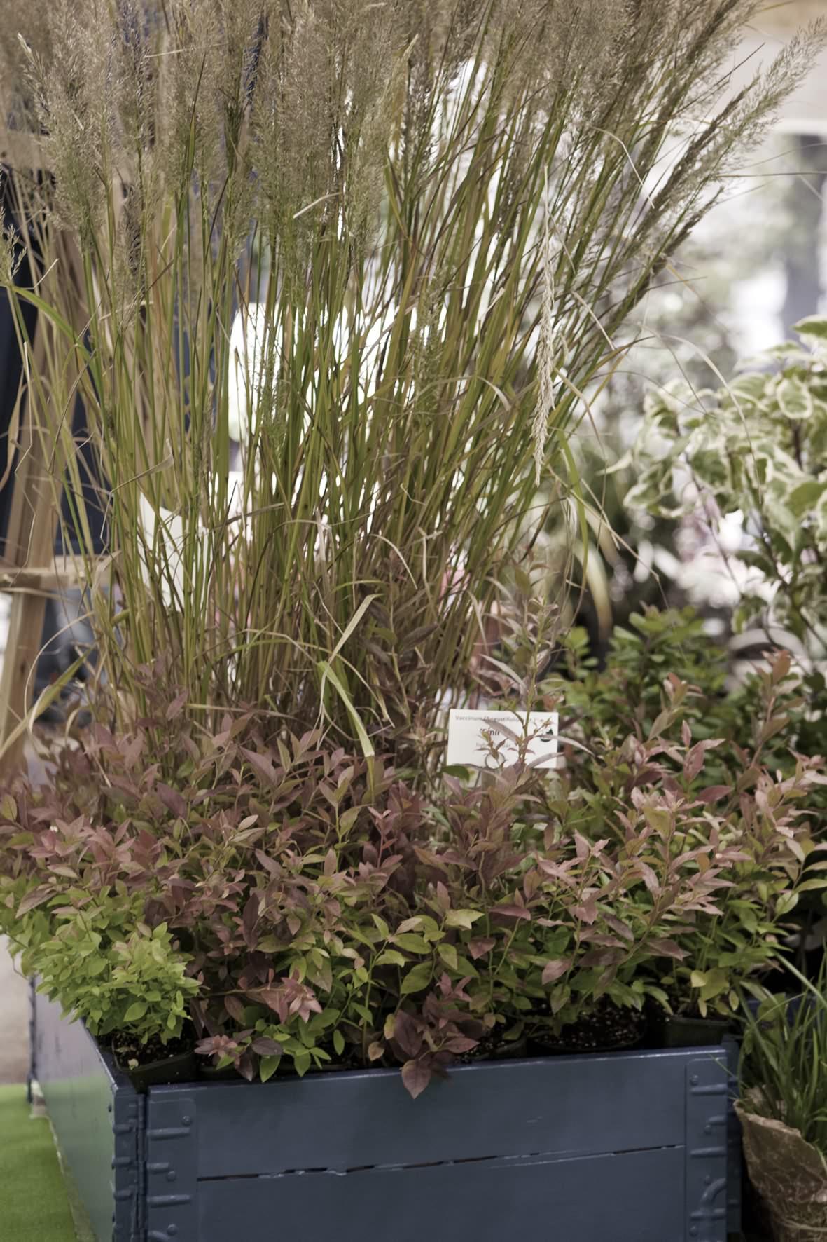 Svenska Plantskolor ANK3611 kopia