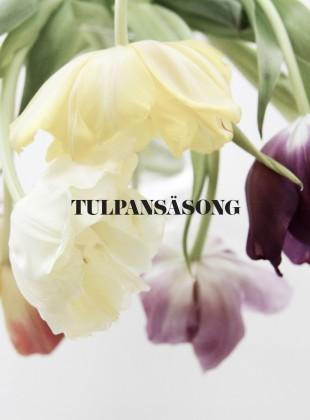 Slider_tulpaner_olikafarger