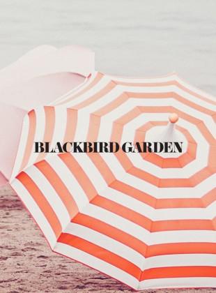 Slider_Blackbird_web