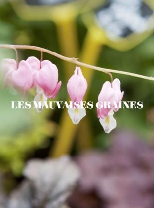 Slider_LesMauvaises