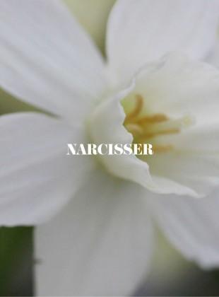 Slider_narcisser
