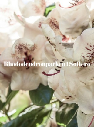 Slider_rhododendron