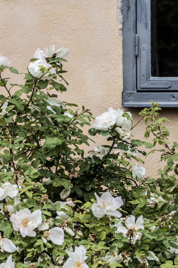 IMG_4386_skeppsholmen